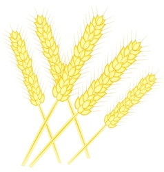 Ear of the wheat vector