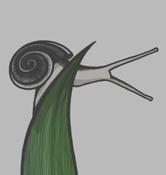 Hand draw snail on blade of gras eps10 vector image