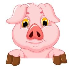 pig cartoon with blank board vector image
