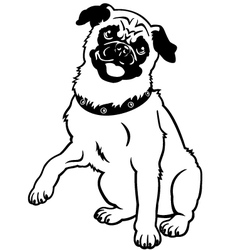 Pug black and white vector