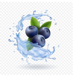 blueberry and water splash isolated vector image vector image