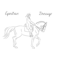 dressage horse with rider vector image