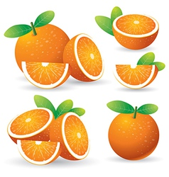 oranges with leaves set vector image vector image
