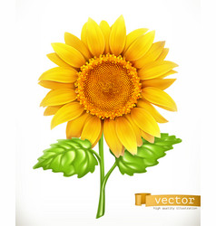sunflower 3d icon vector image vector image