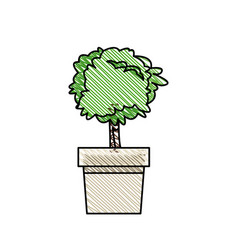 tree pot plant nature decoration vector image