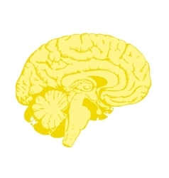Golden brain vector