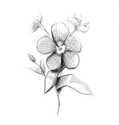Flower artistic sketch vector