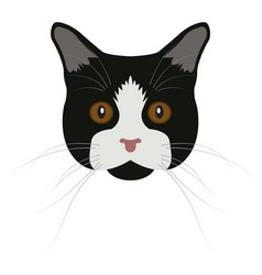 isolated manx cat vector image vector image