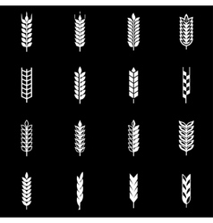 white wheat ear icon set vector image