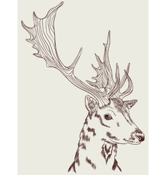 Doe graphic drawing vector