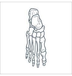 Bones of foot skeleton part isolated on white vector