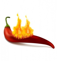 red chili pepper vector image