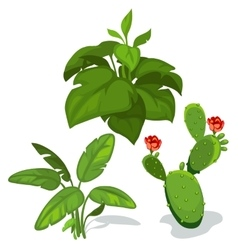 Cactus with flower and large green leaves vector image vector image