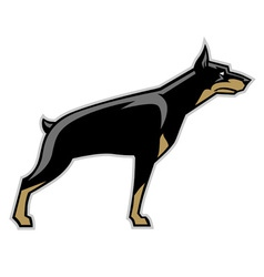 doberman dog vector image vector image