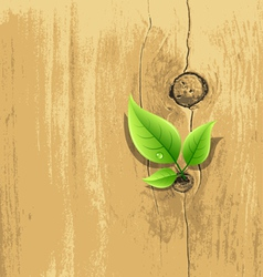Green leaf on old wood background vector
