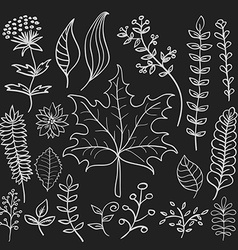 Hand drawn doodle leaves set vector
