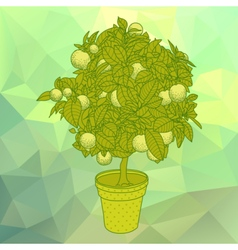 Citrus tangerine orange or citrus tree in a pot vector