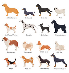 Profile dogs icon set vector