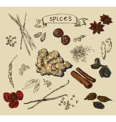 Background with hand drawn spices vector