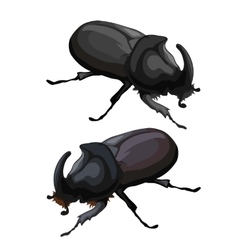 Black beetle rhinoceros on white background vector