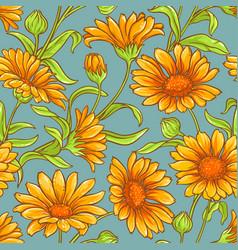 Calendula seamless pattern vector