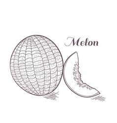 Engaved melon vector