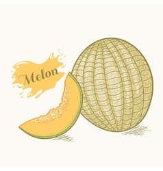 Hand drawn melon with slice vector