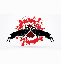 Ibex fighting mountain goat battle vector