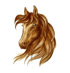 Brown stallion horse icon for equestrian design vector