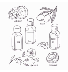 Healthy oil set in outline style coconut walnut vector