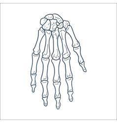 Bones of hand skeleton part isolated on white vector