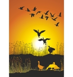 Migrating geese at sunse vector image vector image