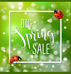 Spring sale banner with realistic ladybugs design vector