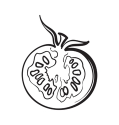 Sketch style drawing of ripe half tomato vector