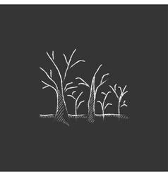 Tree with bare branches drawn in chalk icon vector