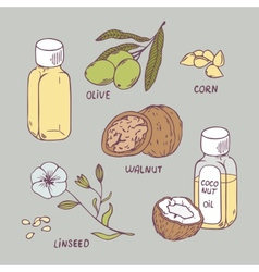 Healthy oil set coconut walnut olive corn and vector