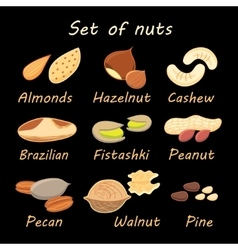 Set collection of various nuts vector
