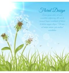 White dandelions on green grass vector