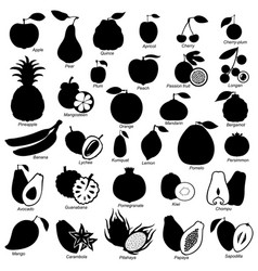 Fruits set image vector