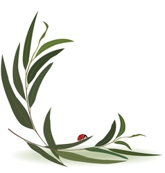 ladybird and eucalyptus vector image