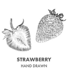 Sketch of strawberry Hand drawn Fruit collection vector image