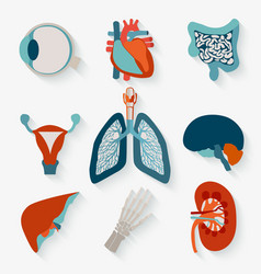 Medical icons of internal human organs vector