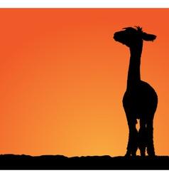 Detailed sheared female lama vector image vector image
