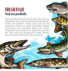 fish animal sketch poster template design vector image