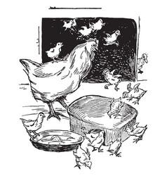 Mother hen baby chicks vintage vector
