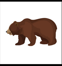 Large brown bear side view close-up graphic icon vector