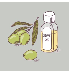 Olive oil in bottle with branch close up doodle vector
