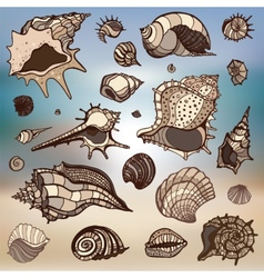 Sea shells set Blurred background vector image