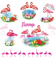 Set of Flamingoes and Arrangement from tropical vector image