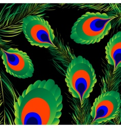 peacock feathers background vector image